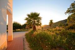 Palmeira na frente de uma casa no Algarve, Portugal Fotos de Stock