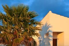 Palmeira na frente de uma casa no Algarve, Portugal fotografia de stock royalty free