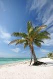 Palmeira na praia Fotografia de Stock Royalty Free