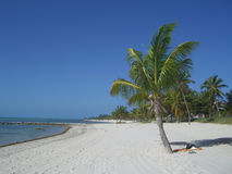 Palmeira na praia Foto de Stock Royalty Free