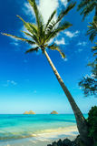 Palmeira na praia de Lanikai, O'ahu, Hawai'i Fotos de Stock Royalty Free