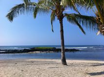 Palmeira na praia do porto de Honokohau na ilha grande Havaí Foto de Stock Royalty Free
