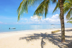 Palmeira na praia em Penang, Malásia foto de stock