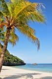 Palmeira na praia tropical Foto de Stock