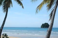 Palmeira na praia tropical fotografia de stock