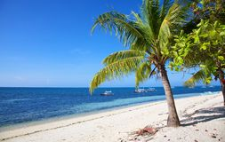 Palmeira na praia tropical da areia branca na ilha de Malapascua, Filipinas Fotografia de Stock