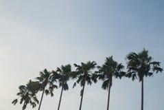 Palmeira natural que enfrenta o céu azul Fotografia de Stock