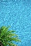 Palmeira no fundo azul da piscina do aqua Fotografia de Stock Royalty Free