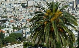 Palmeira no fundo de muitas casas brilhantes Fotos de Stock