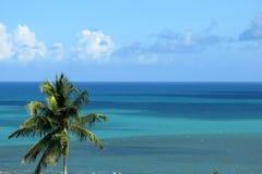 Palmeira no fundo do oceano Foto de Stock