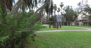 Palmeira no parque filme