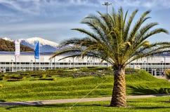 Palmeira no parque olímpico Fotografia de Stock