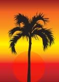 Palmeira no por do sol ilustração royalty free