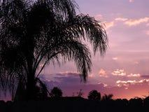Palmeira no por do sol Imagens de Stock Royalty Free