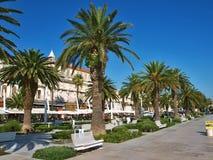 Palmeira no Split imagens de stock