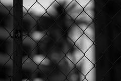 Palmeira obscura prendida imagens de stock