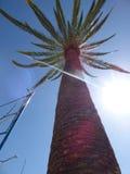 Palmeira Ovalle, o Chile Fotografia de Stock Royalty Free