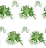 Palmeira pattern-02 ilustração royalty free