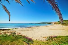 Palmeira pela costa na praia de Le Bombarde Fotos de Stock Royalty Free