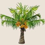 Palmeira pequena dos desenhos animados com cocos Fotografia de Stock Royalty Free