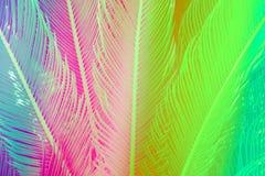 A palmeira pontudo longa sae no teste padrão geométrico bonito Tonificado em cores de néon vibrantes Fundo tropical botânico da n imagem de stock royalty free