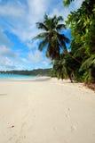 Palmeira que eleva-se acima do b Fotografia de Stock Royalty Free