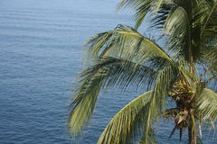 Palmeira que estende para fora no oceano Imagens de Stock