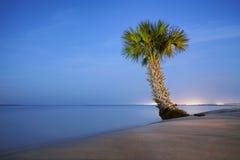 Palmeira só Fotografia de Stock Royalty Free