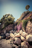 Palmeira só em uma costa rochosa Fotos de Stock Royalty Free