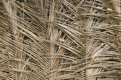 A palmeira secada folheia textura fotos de stock