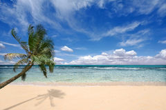 Palmeira sobre as ondas de oceano Fotografia de Stock Royalty Free