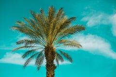 Palmeira sobre o fundo do céu, Nevada Foto de Stock Royalty Free