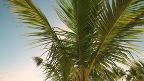 Palmeira tropical com luz do sol do bokeh no céu azul com nuvens vídeos de arquivo