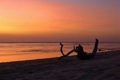 Palmeira tropical com por do sol Fotos de Stock Royalty Free