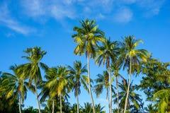 Palmeira tropical no céu azul Fotos de Stock Royalty Free