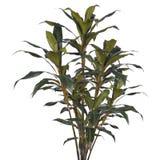 Palmeira verde isolada no branco imagem de stock royalty free