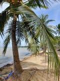 Palmeira Vietname da praia Fotografia de Stock