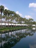 Palmeiras. Fotografia de Stock