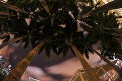 Palmeiras Foto de Stock