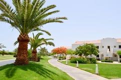 Palmeiras altas com as folhas verdes contra as casas brancas das construções do contexto no descanso morno tropical exótico da es fotos de stock royalty free