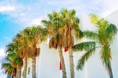 Palmeiras altas que cercam as casas brancas no fundo do céu azul Cores vibrantes do verão da luz solar brilhante Imagem de Stock Royalty Free