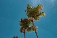 Palmeiras bonitas, altas e delgadas na praia de Bavaro, Punta Cana Conceito das f?rias ou do feriado fotos de stock royalty free