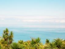 Palmeiras bonitas com o mar no fundo do céu azul imagem de stock