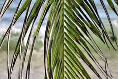 Palmeiras bonitas na praia nas ilhas Seychelles do paraíso imagem de stock