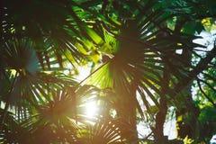 Palmeiras brilhantes Verão Sun recurso Férias no mar imagens de stock