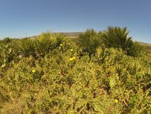 Palmeiras, cacto e flores do deserto imagens de stock