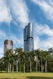 Palmeiras com os arranha-céus em Brisbane CBD Foto de Stock