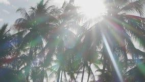 Palmeiras com raios do sol vídeos de arquivo