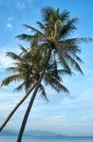 Palmeiras com um céu azul em uma praia em Nha Trang, Vietname Foto de Stock Royalty Free