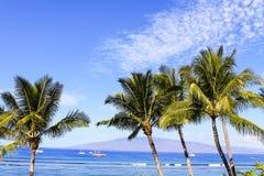 Palmeiras contra o céu azul e o oceano Foto de Stock Royalty Free